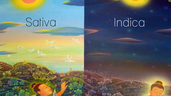 Indica vs Sativa: let's see what your personality is most like.