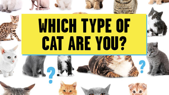 Answer the questions to find out what kind of cat you are!