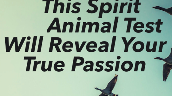 Animals have special abilities, they are extra sensitive and intuitive to our energies. Spirit animals can help you on your journey and they can guide you to make the right decisions. They can even help you uncover your true passion!