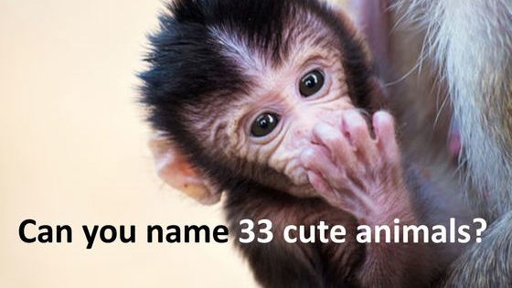 You're a cuteness genius if you can get 33/33.