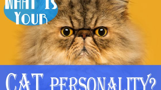 Which cat breed is your one-of-a-kind self most like?