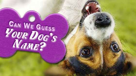 Let us guess what your dog is named with just 6 little questions!