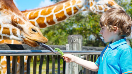 Plan a day at the zoo and we'll tell you which animal you're most like!