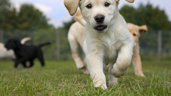 It's the world's most adorable quiz! One puppy in each group is a different breed than the other three. Test your puppy expertise here!