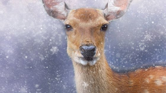It is the festive time of year and we know you all want to know what Christmas spirit animal you are.
