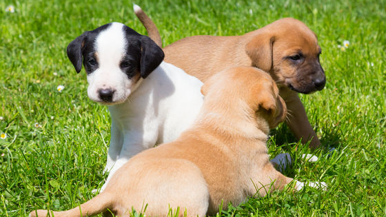 Puppies, puppies everywhere! Which mixed breed puppy should you adopt? Take this quiz to find out!
