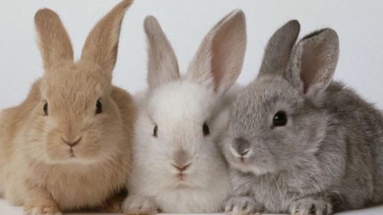 Ever wonder what rabbit you are? Take this quiz to find out!