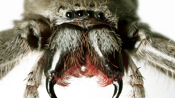 Out of all the creepy and crawly pests in Utah, spiders are among the most feared and for good reason they  can be very dangerous. Do you know which spiders you should be fearing and which ones are harmless? We put together the most dangerous and harmless spiders in Utah to test your arachnid knowledge!