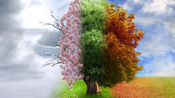 Spring, Summer, Winter, or Fall?