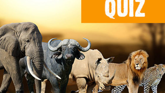 """Channel your inner animal. Take our fun quiz and discover which of the """"Big 5"""" African animals you most associate with."""