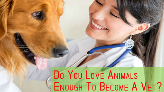 Put your knowledge of animals to the ultimate test!