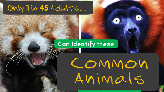 See if you know your red pandas from your red lemurs - does your knowledge extend beyond giraffes and elephants?