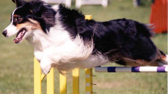 From flyball to agility, find out!