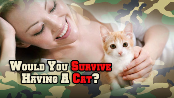They're so cute in internet videos, but when it really comes to living with a cat, could you survive?