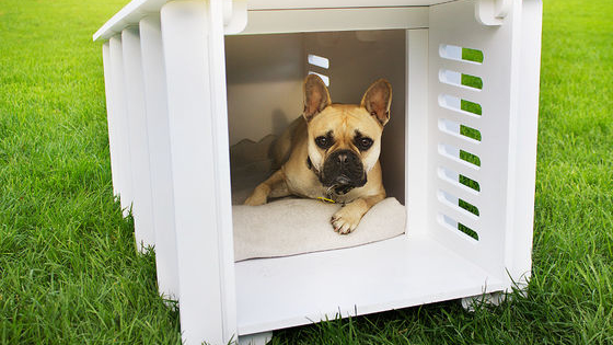 While you're thinking about your dream home, why not take a second to find the perfect place for your pup, too!