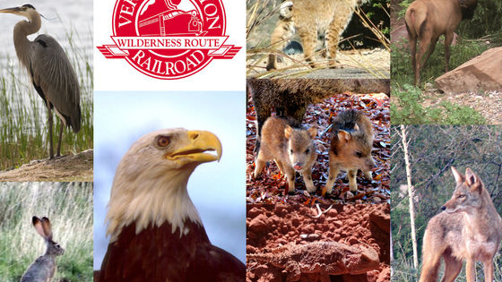 Arizona's wide variety of ecosystems provides excellent habitat for a wild array of native animals. Many of these creatures may be seen while riding Verde Canyon Railroad. Which type of animal are you?