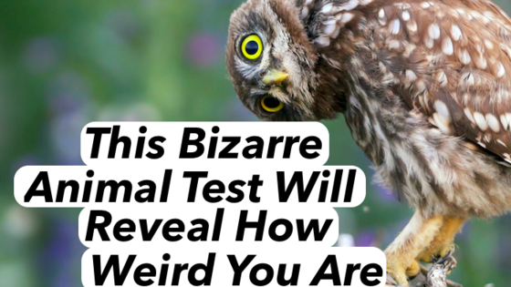 Could bizarre animals tell you how bizarre you actually are? Sure they can! Choose the weirdest animals and see your results!