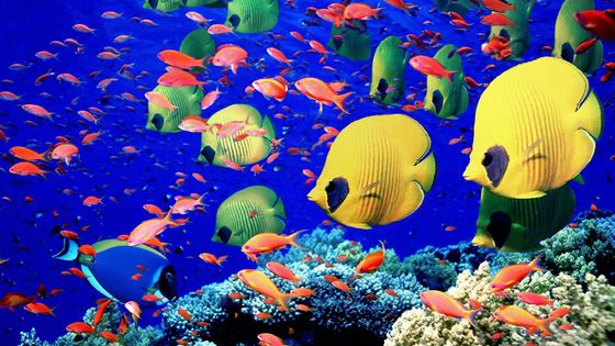 Find out which marine animal stands for your personality!