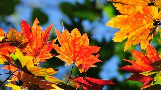 Here to make the transition from summer to winter, autumn is back in full swing! If you were a leaf: What wonderful autumn color would you be?