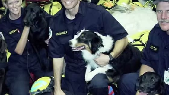 Following the terrorist attacks on September 11, 2001, within the rubble and dust, hardworking dogs from across the country came to New York City to help the search and rescue efforts.