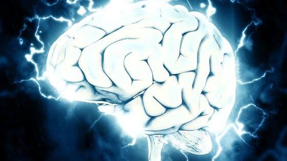 Wie gut kennst du dich mit Gehirnen aus? Teste dein Wissen bei unserer Mini-Neurowissenschaften-Olympiade.