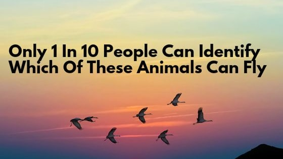 This list will surprise you when you learn which animals can fly - and which can't!