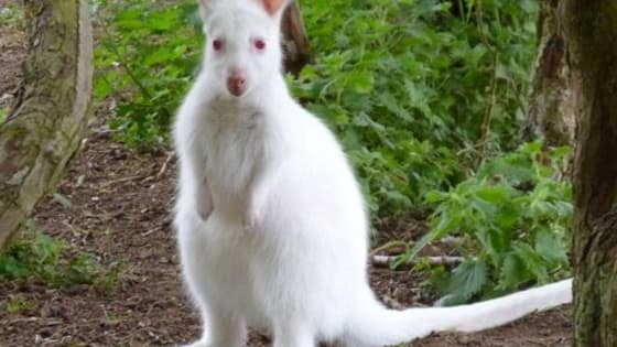 There are some wonders on the planet of animals and you can be shocked if you get to see these sort of creations of nature. Among these special creations in the animals' kingdom is albino animals. http://www.iplaybuzz.com