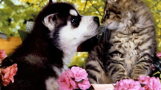 Which is cuter, a kitten or a puppy?