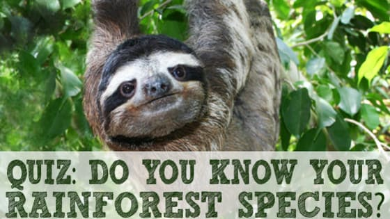 Test your knowledge of rain forest species, most are from Costa Rica and seen on our Costa Rica Big Cats, Primates and Turtle Conservation project: https://frontier.ac.uk/projects/102/Costa-Rica-Big-Cats%2c-Primates-%26-Turtle-Conservation