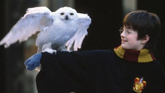 Have you ever wondered what pet would accompany you to the greatest school of Witchcraft and Wizardry ever? A cat? Toad? Owl? Rat? Pygmy puff?