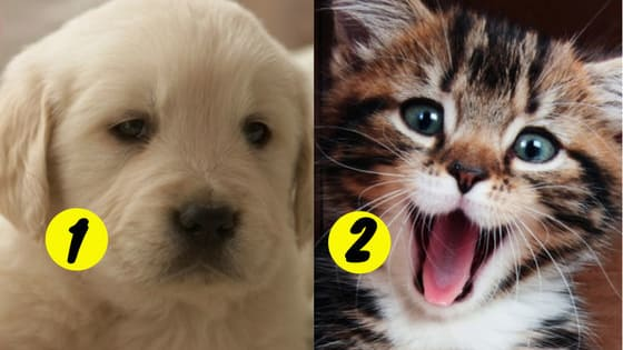 In merely 9 questions, this test will determine whether you're a dog-person or a cat-person, and reveal the hidden traits of your personality. The result will blow your mind.