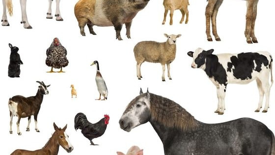 Can You Recognize All of These Animals?