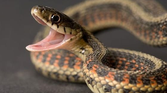 Take this quiz to see what type of snake you are!