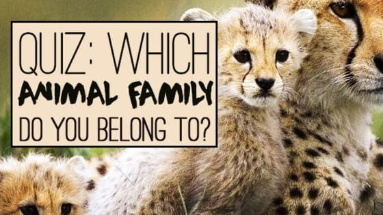 If you're taking this quiz, chances are that you're a human being and a mammal. But are you a mammal at heart too? Whizz through this quiz and discover who your real animal family are!