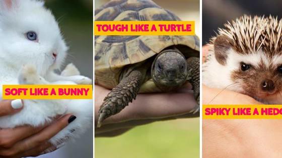 Are you soft like a bunny or tough like a turtle?