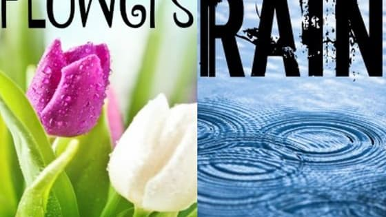 Are you sweet like the sun or fresh like the rain?