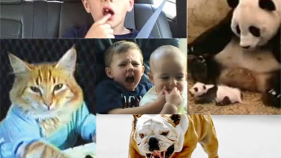 Did you know April 29 is Viral Video Day? Celebrate with us by taking this quiz and finding out which classic viral video best describes you!