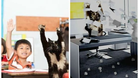 Keys the cat likes to stand on her hind legs and put her paws in the air like she just don't care, but no one knows why. Here are some of the finest Photoshop attempts to explain her strange behavior!
