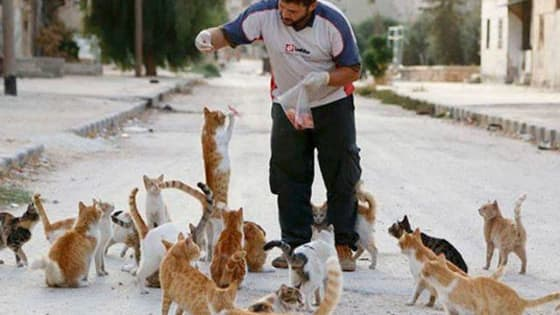 nicknamed the 'cat man of Aleppo' he now has hundreds of abandoned kitties to care for