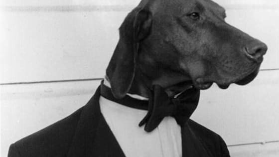 Visions of handsome fellas in tuxes still spinning in your head from the Oscars?  Vote for which dog breed best represents these leading men. Don't see your ideal breed? Let's discuss in the comments!