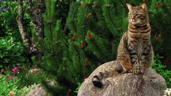 Discover what cat breed you really are!