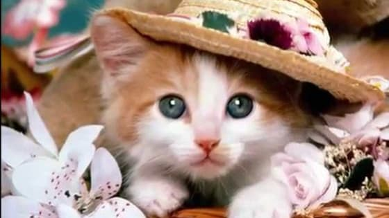 Find out what the PURRFECT cat breed is for your personality.
