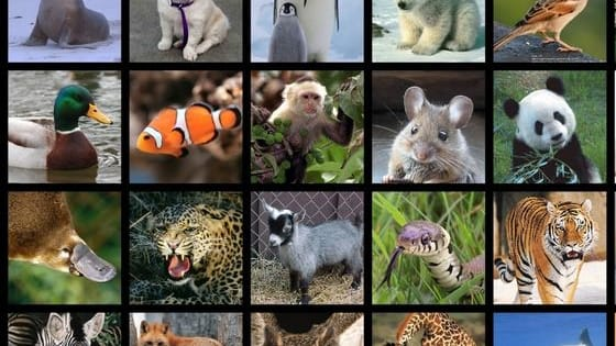 Take this quiz to find out which animal lives in your soul!