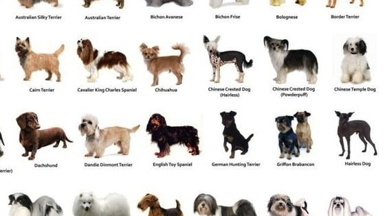 What Dog Breed Are You. We can tell you after 6 questions. Enjoy!