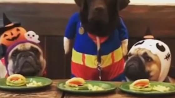 This Labrador retriever is such a speed eating champion, she not only wolfs down her own plate in seconds, but her competitors' as well! See happen for yourself here!