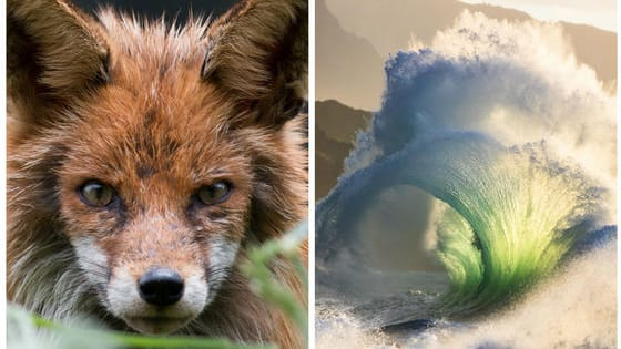 These entries into National Geographic's Nature Photographer of the Year contest are all winners in our book, but what do you think? Upvote your favorites here!