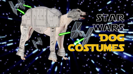 These dogs wearing Star Wars Halloween costumes win Halloween. Which Star Wars Halloween costume will your dog wear?