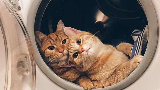 Also, they're brothers-double besties!