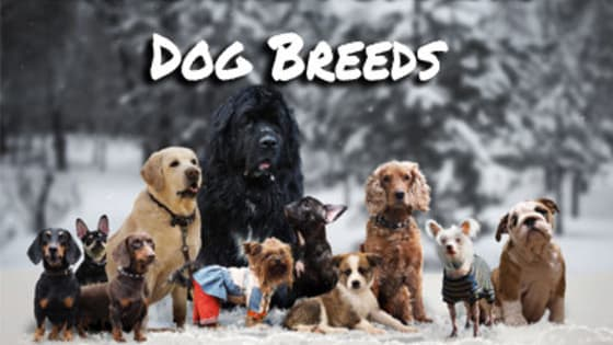 Can you recognize these which popular breed this dog belongs to?   Some very cute dog pics are waiting for ya!