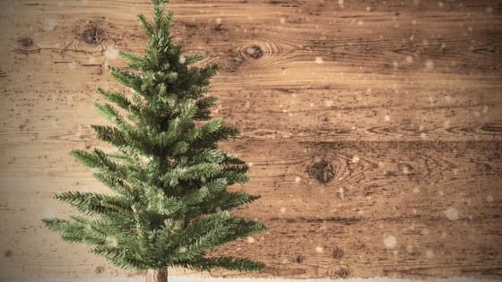 Are you spruce, pine, or fir? Take this quiz to find out!